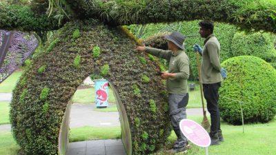 Футуристические сады у залива: мир растений