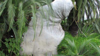 Футуристические сады у залива: в каньоне