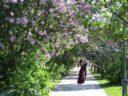 Сиреневый Сад в Москве
